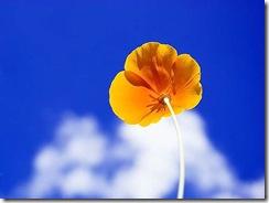 la flor y la nube